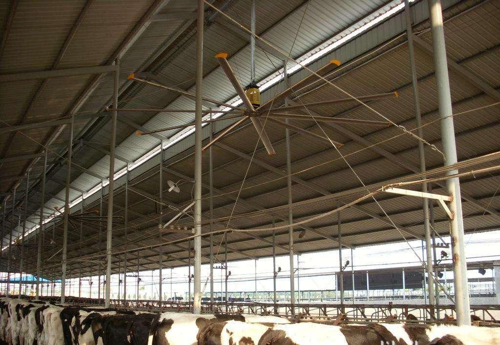 负压风机和工业吊扇的区别